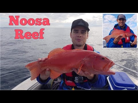 Noosa Coral Trout - Sunshine Reef And Jew Shoal - Tinny