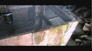 Pigeon Breeding Cages Quick Wire Trimmming Technique