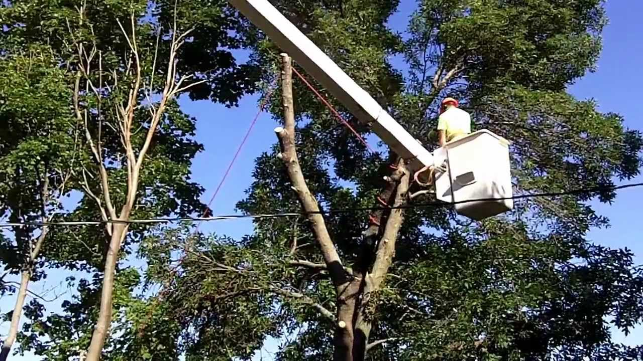 Tree Removal Video From My Back Yard Step By