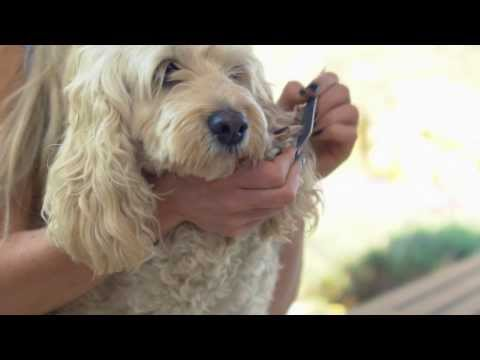 That Vet Show - How to Clip Your Dog's Nails