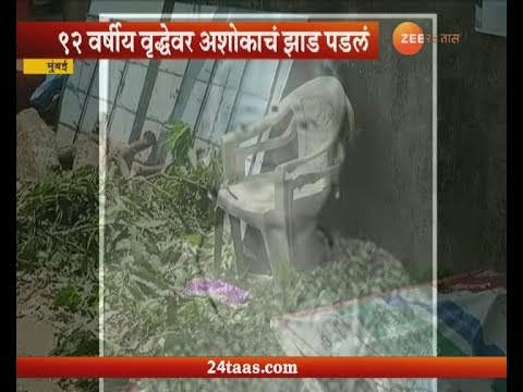 Mumbai | 92 Year Old Women Died After Tree Fall No Case Registered