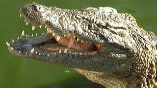 Tunesien Krokodil Farm Djerba