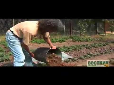Видео о том, как укрыть розы на зиму