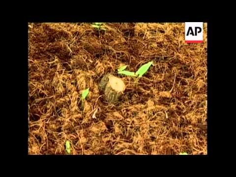 Coconut husks used in eco-friendly nets for combating erosion and preventing landslides