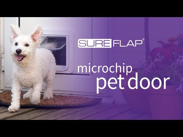 Top 5 Best Pet Door For Your Home Heavy
