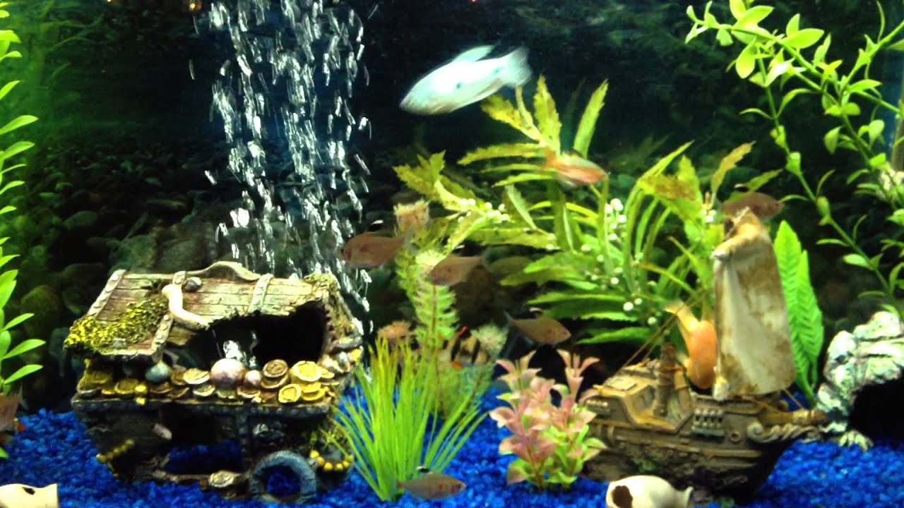 Freshwater Fish - Tetra, Barb, Gourami and Blood Parrot - YouTube