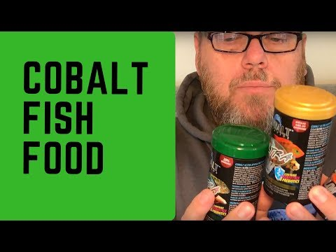 Fish Food Review Cobalt Ultra: River Life 100 Subscribers #FISHFAM