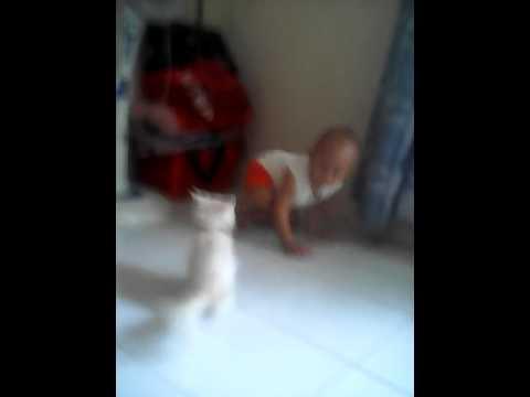 Kucing persia vs unang