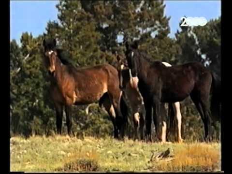Disegni Da Colorare Di Cavalli Selvaggi.Cavalli Disegni Da Colorare E Da Stampare