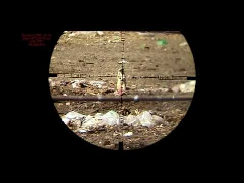 Ground Squirrel Connection .25 Cal Vs .30 Cal