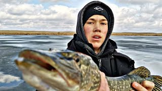 зимняя рыбалка | РЫБАЛКА НА ЖЕРЛИЦЫ ЩУКА ОКУНЬ  АТАКУЮТ!!!