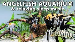 🎵 Relaxing Angelfish Aquarium with Sleep Music