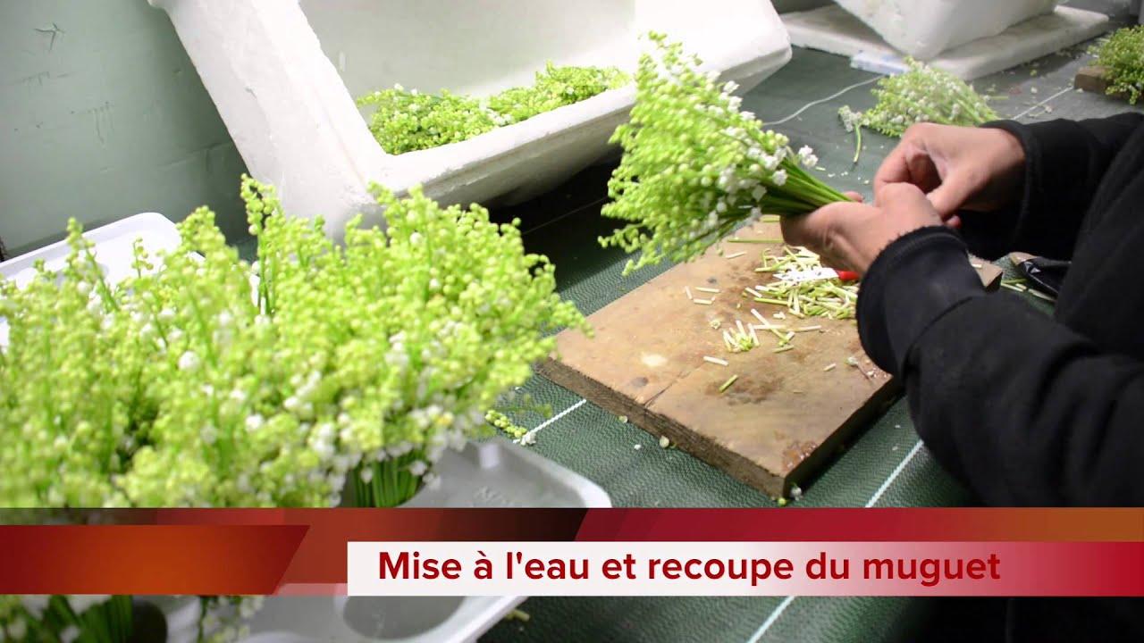 muguet - bigot fleurs - youtube