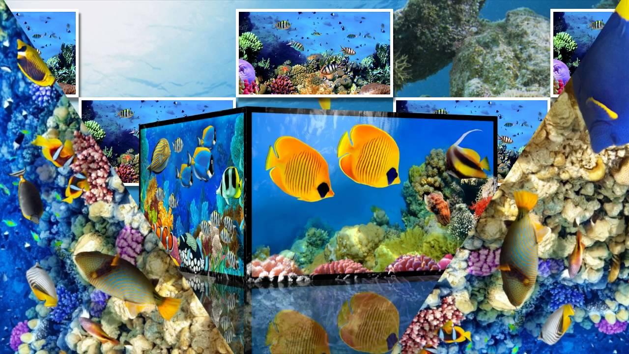Релакс видео подводный мир — 6