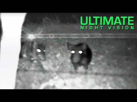 Sightmark Photon 3.5X Digital Night Vision Scope - Hog Hunting