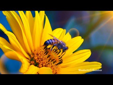 Spoleto (Umbria, Italy) - L'aura dell'agricoltore umbro: il racconto del miele