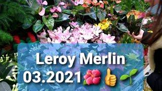 Leroy Merlin 03 2021 Wielka Dostawa Roslin Przeceny Cytrusy Storczyki Itd Cz Nr1 1322 Youtube
