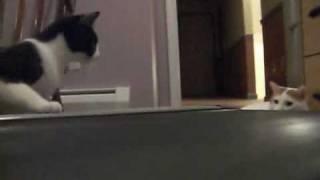 Коты против беговой дорожки :)