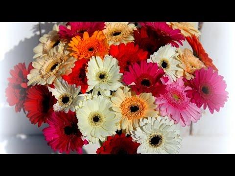 Красивые картинки под музыку (Цветы)