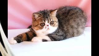 """#1 кошки """"милые мордочки"""""""