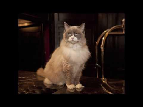 Star Dreams Café Present Dreaming With...Matilda The Algonquin Cat