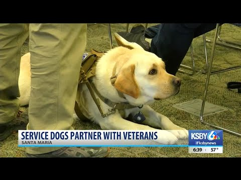 Local program connects veterans, first responders with highly trained service dogs