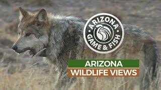 Episode 5 - 2018/2019 Arizona Wildlife Views Television