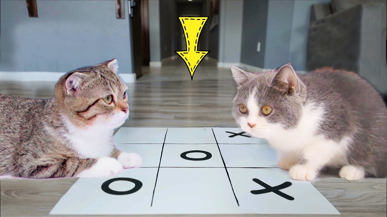 Funny Cats | Cats Play A Very Intense Game of Tic Tac Toe: Who's The Winner? | Baby Cats Videos