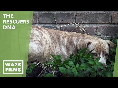 Thumbnail: Hope For Stray Paws Scared & Hiding In A Corner Until Rescuers Threw Chicken: Ep 11 The Rescuers DNA