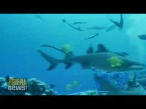Coral Sea sharks could be wiped out