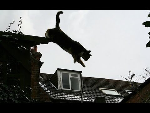 EXTREME CAT JUMP FROM ROOF - AMAZING FUNNY CATS