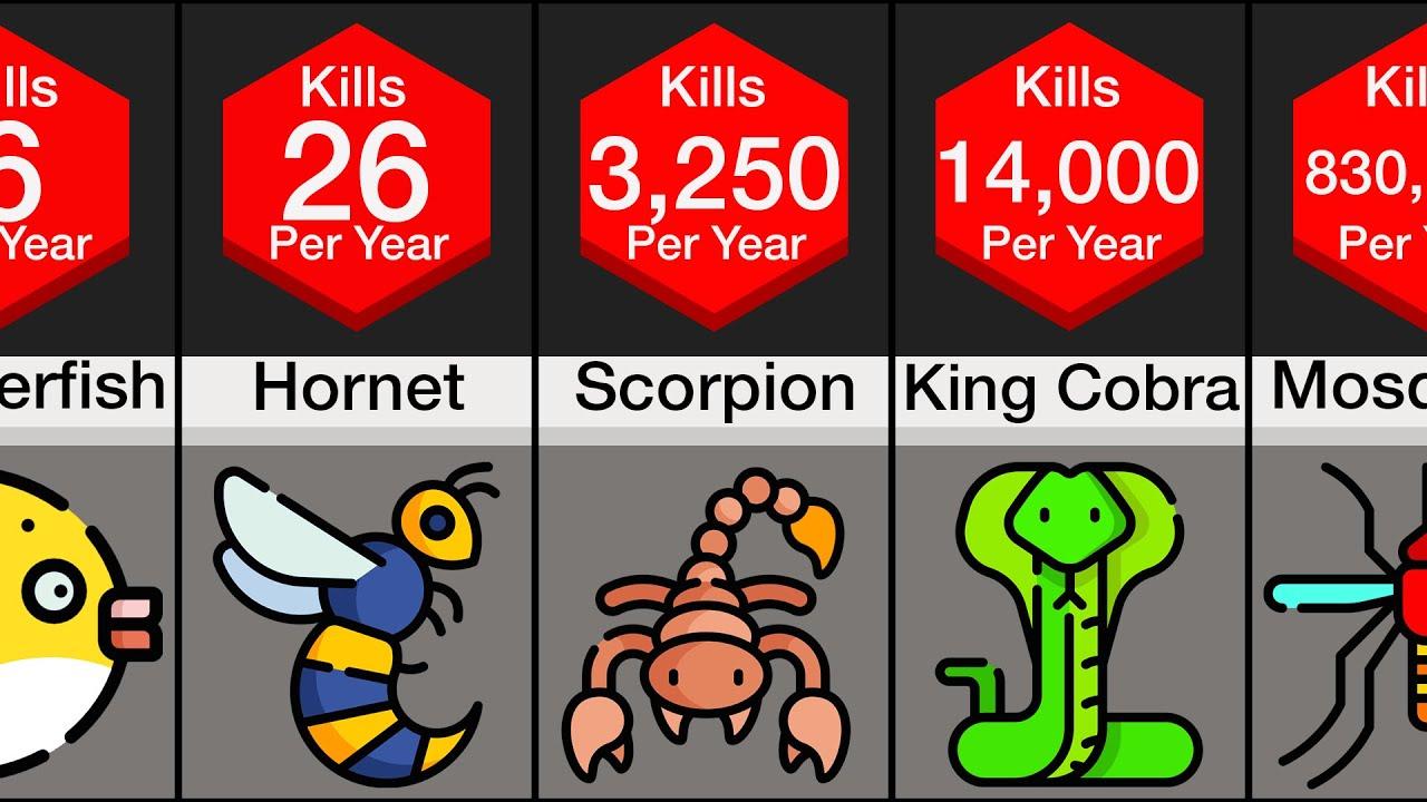 Comparison: Deadliest Animals