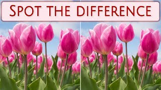 [ Brain games ] Ep.029 Plants_01.flowers | Spot the difference | photo puzzles | Healing