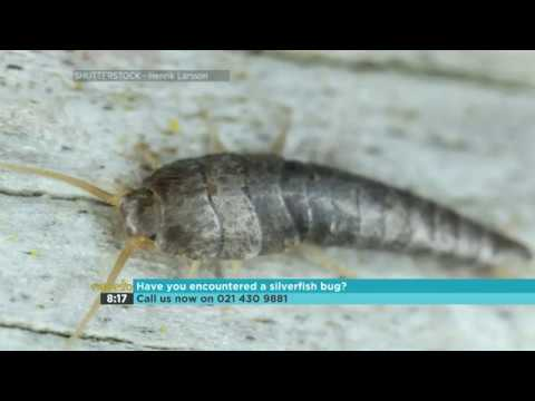 Into The Wild – Silverfish Bug 1-4