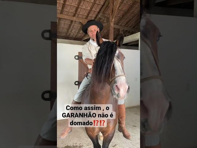 INACREDITÁVEL!!! O cavalo não é domado. #shorts #videoshorts #cavalo #doma