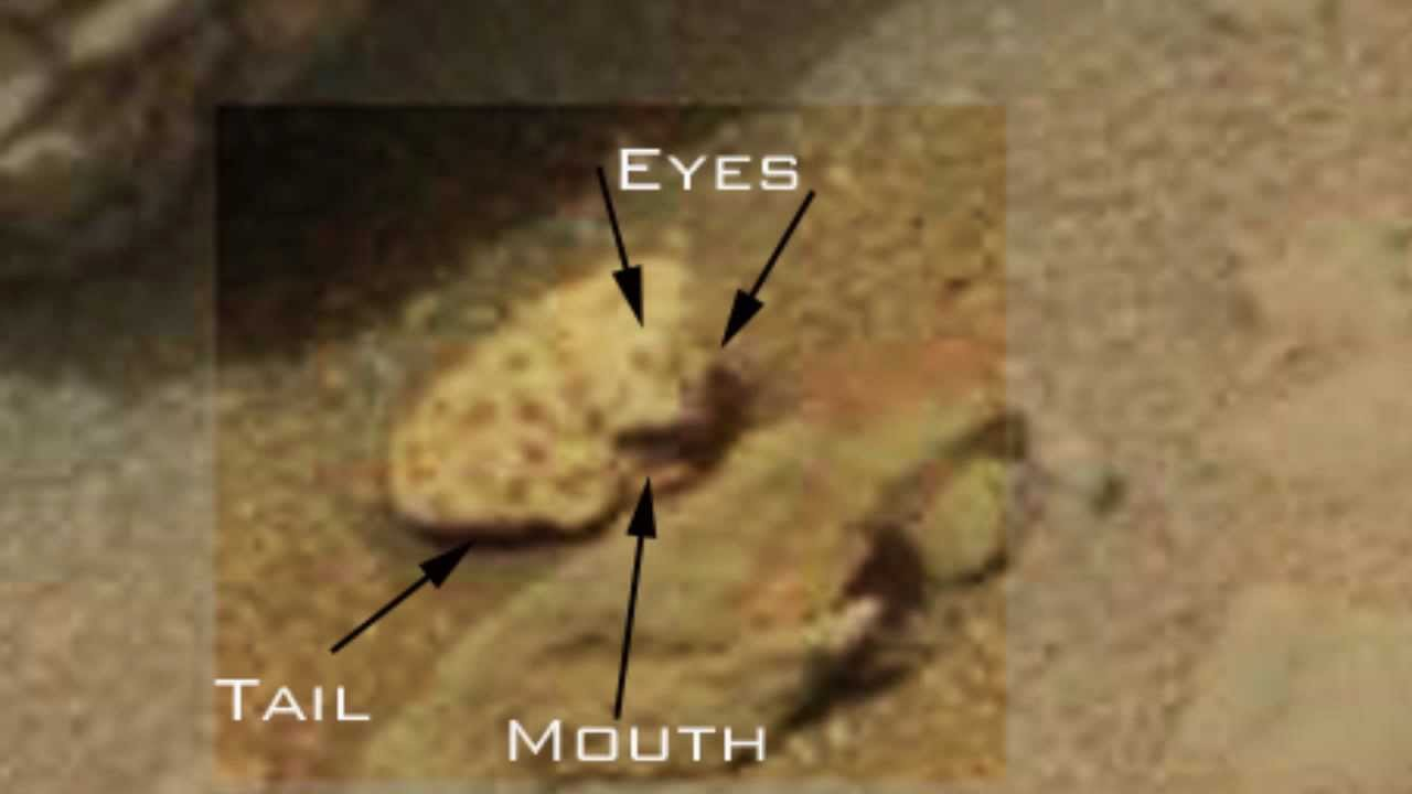 Alien Creature on Mars Frog or Reptilian life form - YouTube