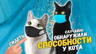 Чем мы занимаемся на карантине? Обнаружили способности у кота. Приколы с животными / SANI vlog