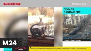 Москвичи сняли на видео нарушителей самоизоляции - Москва 24