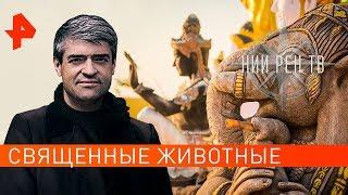 Священные животные. НИИ РЕН ТВ (30.09.2019).