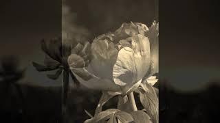 紅蓮華(LiSA)ピアノ伴奏のみMP3