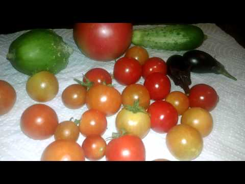 Our Garden Harvest 06/29/15 - 07/05/15