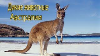 Дикие животные #Австралии #Развивающие мультики