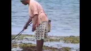 mencari gurit di pantai kilkoda gorom seram bagian timur
