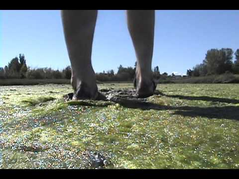 muddy ocean slippers 1.wmv