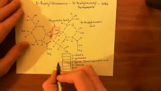 Vancomycin Resistant Enterococcus Faecalis Part 1