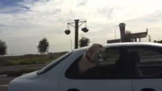 Собака в окне автомобиля!