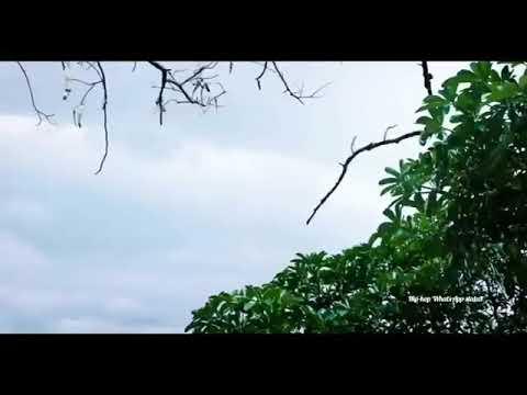 New WhatsApp Status-nan Kalamellam Vala Ava Kannalagu Pothum Song