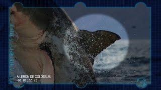 Air Jaws, la traque : les signes distinctifs de Colossus