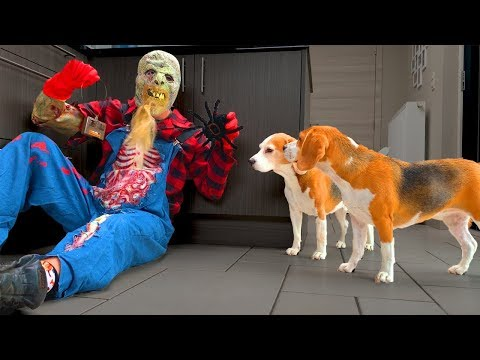 Dogs vs. Zombie prank : Funny Dogs Louie and Marie