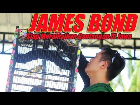 Download Lagu DUNIA KICAU : Kenari James Bond Milik Rio Andreaz Siap Meramaikan Gantangan Di Jawa